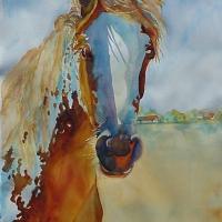 caballo-antonito