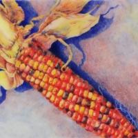 indian-corn-cp